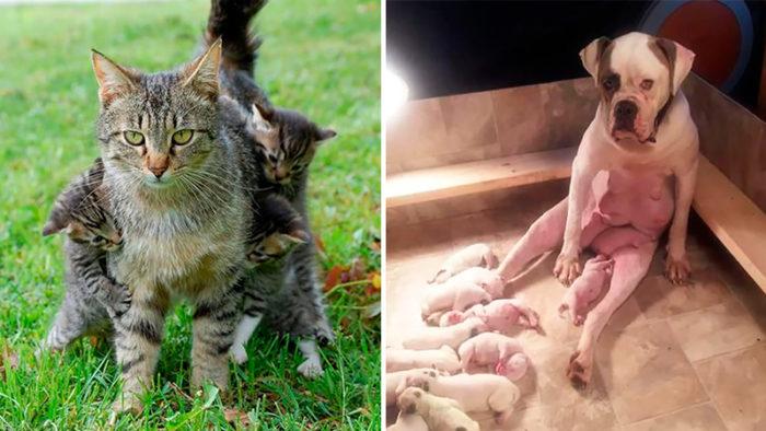 Sexton söta djur med ansiktsuttryck som perfekt summerar föräldraskapet