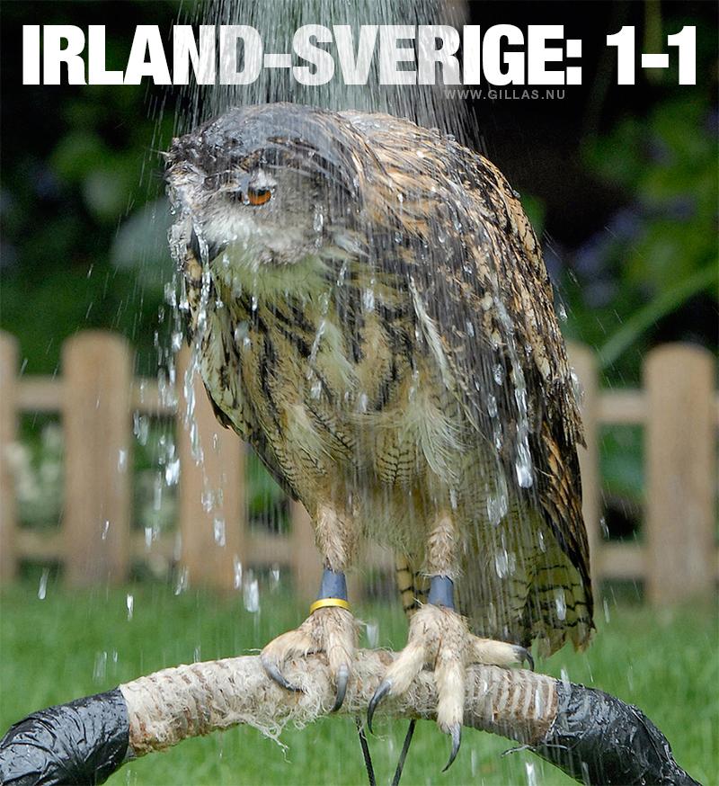 Uggla får kalldusch - Irland-Sverige: 1-1