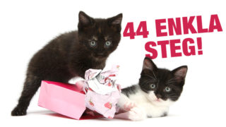 Manual för hur man som kattägare går tillväga för att slå in ett paket