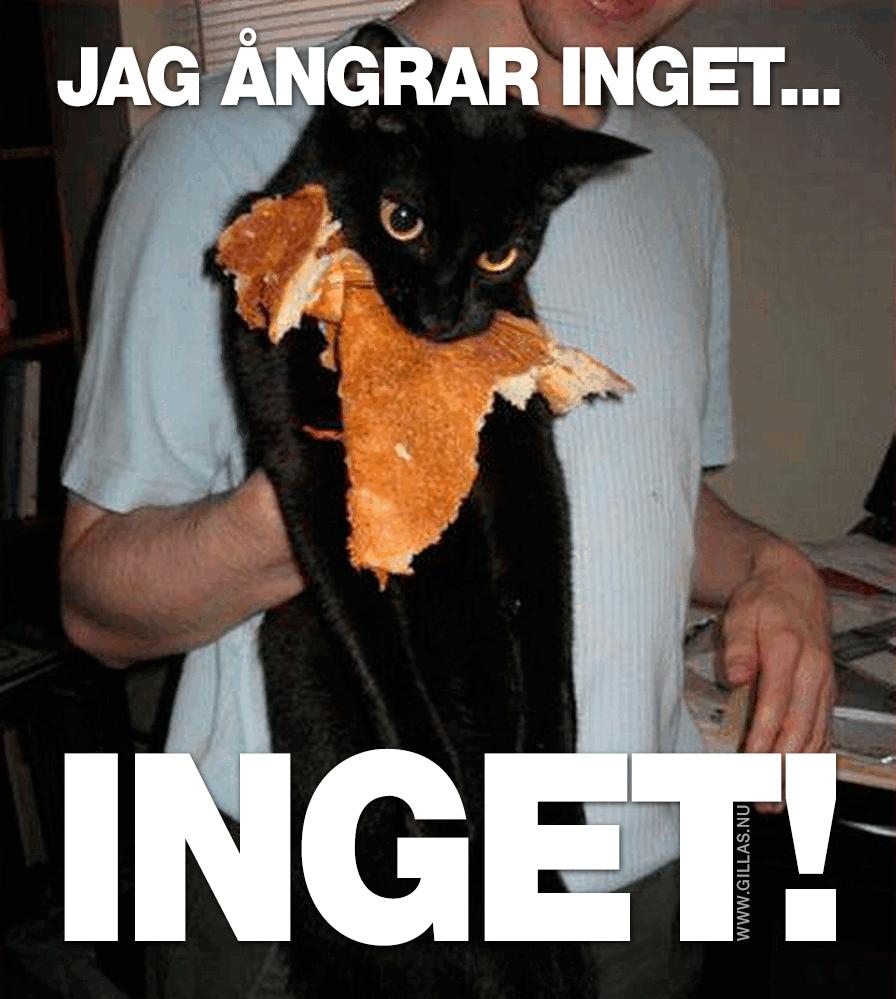 Katt i famnen på människa med pannkaka i munnen - Jag ångrar inget... Inget!