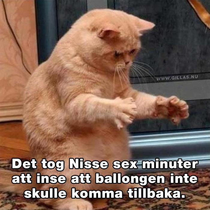 Dagen då Nisse lärde sig en nyttig läxa
