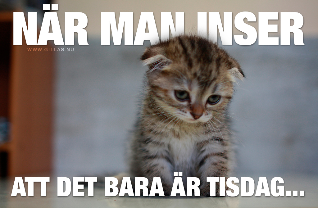Ledsen gullig kattunge - När man inser att det bara är tisdag