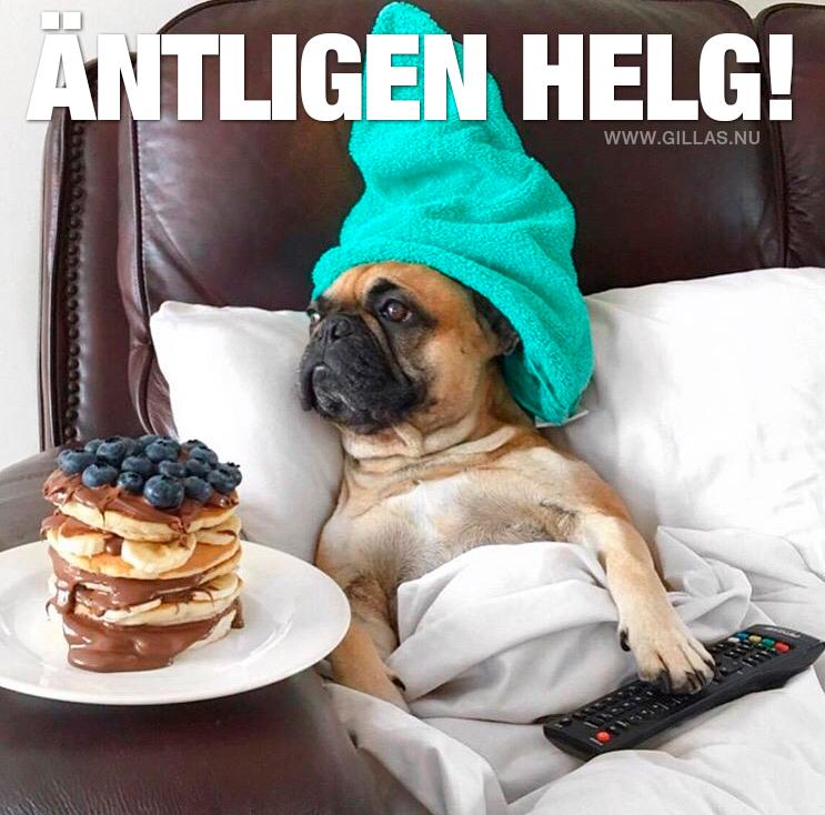 Bildresultat för Roliga hundar bilder fredag
