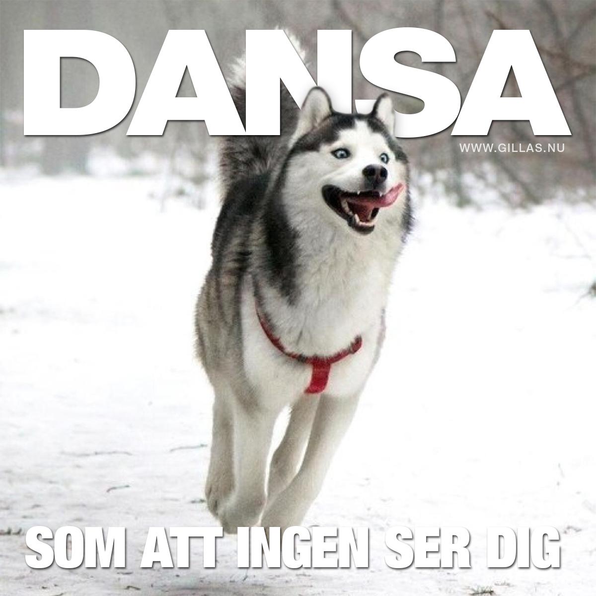 Hoppande hund - Dansa som att ingen ser dig