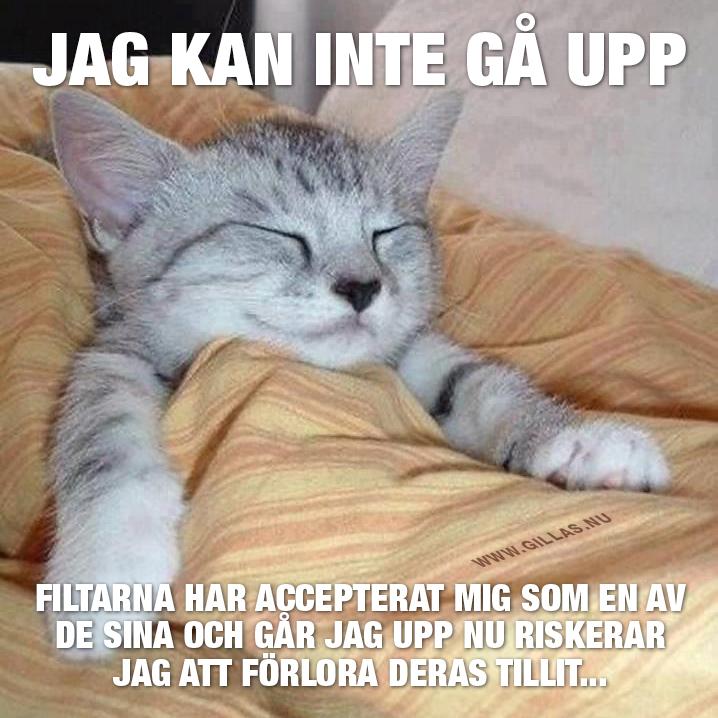 Nedbäddad kattunge - Jag kan inte gå upp