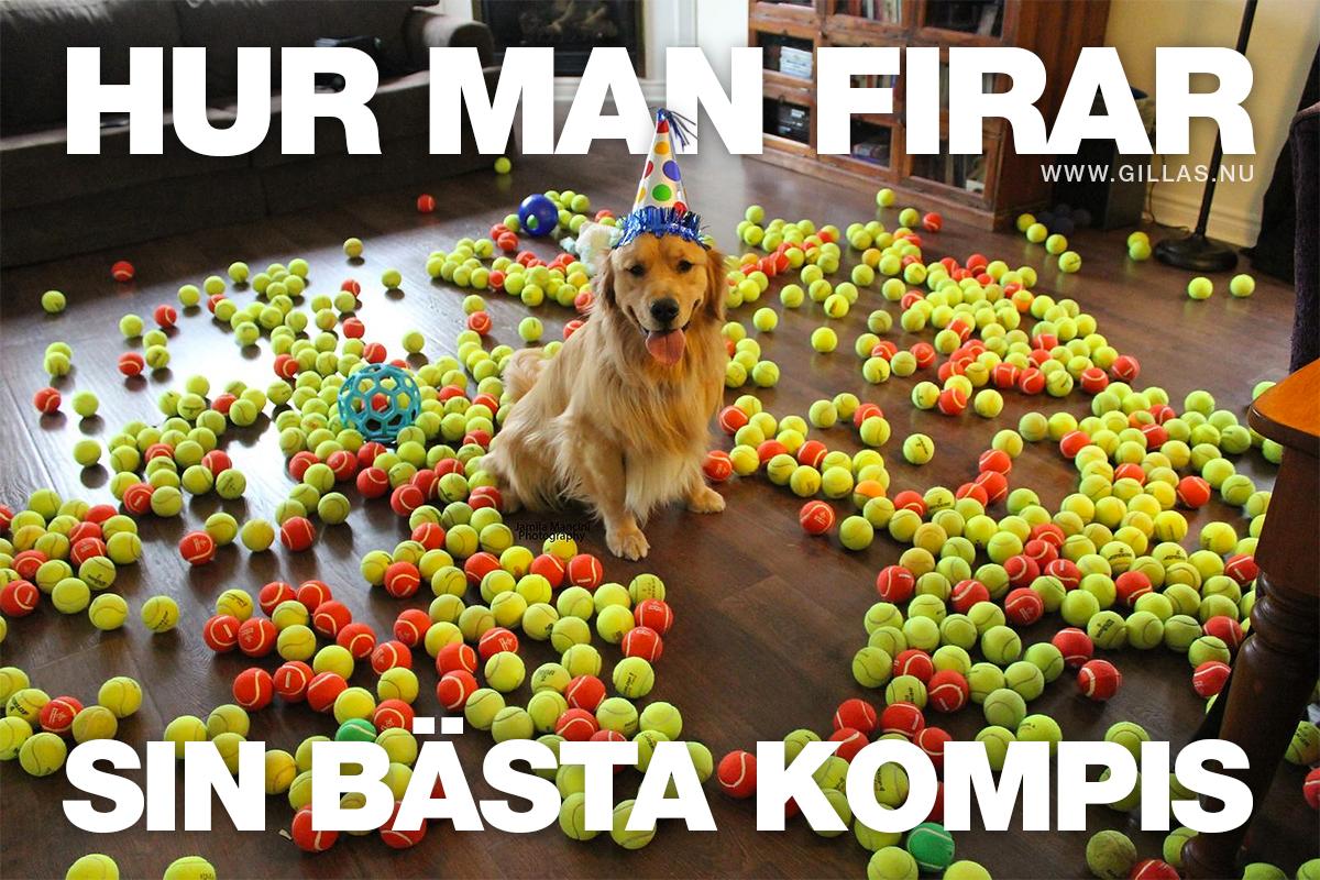 Glad hund bland bollar - Hur man firar sin bästa kompis