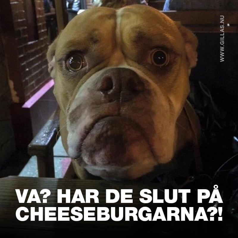 Leden hund - Va?! Har de slut på cheeseburgarna?