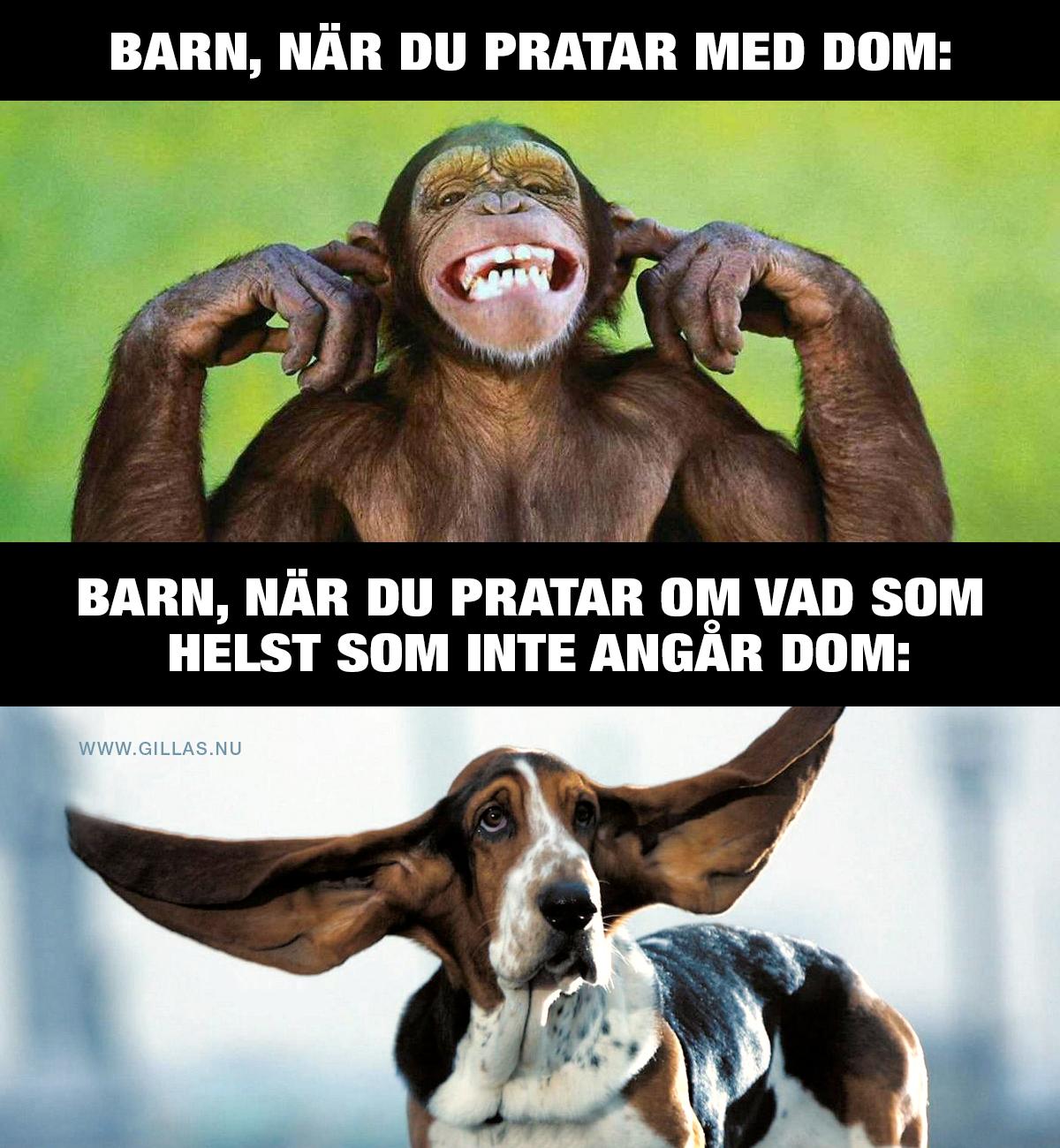 Apa som håller för öronen och hund med stora öron - Barn, när du pratar med dem