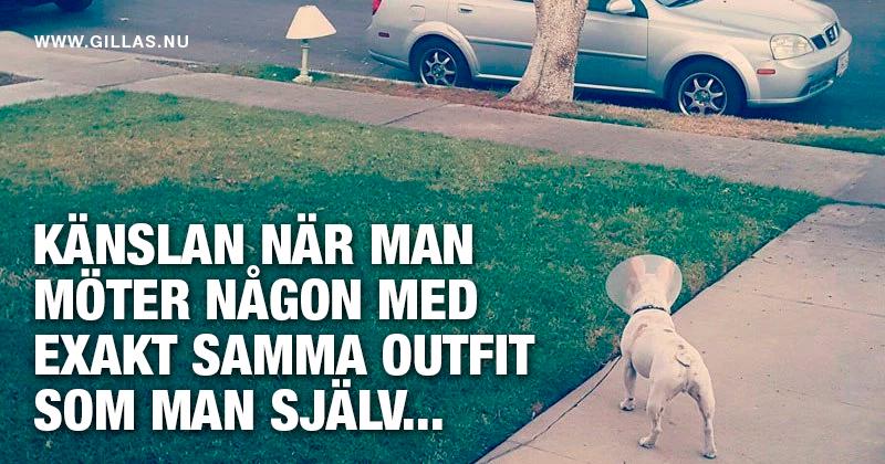 Hund med tratt tittar på lampa - Känslan när man möter någon med exakt samma outfit som man själv