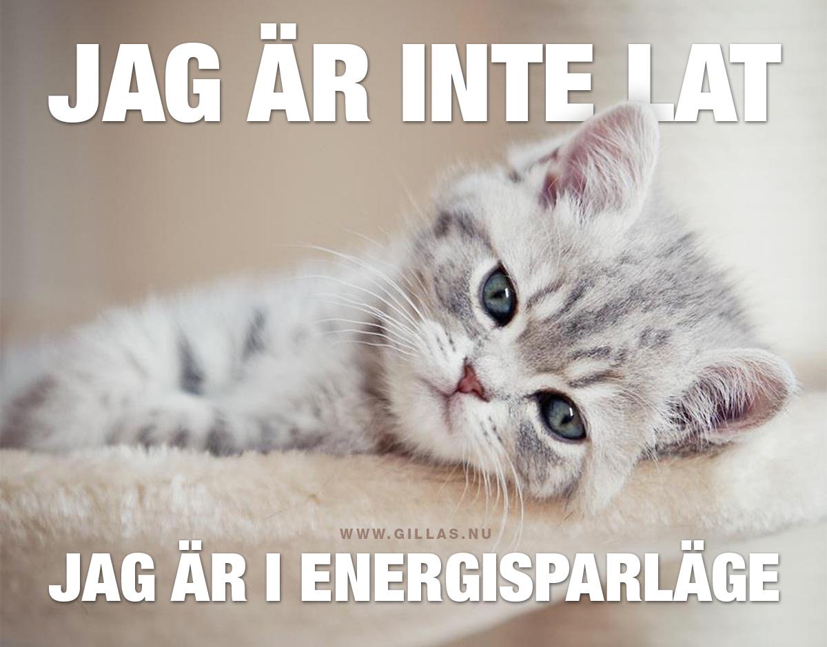 Trött kattunge - Jag är inte lat, jag är i energisparläge