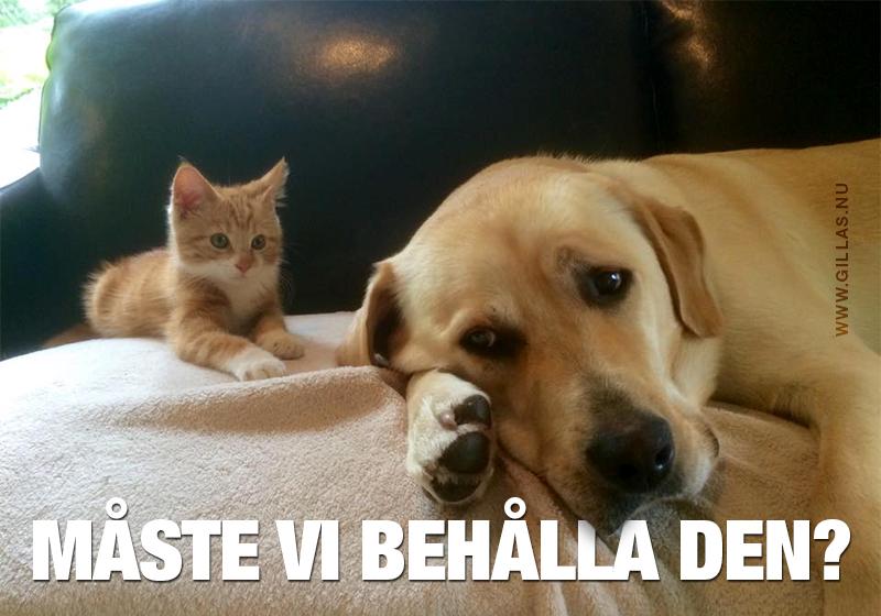 Besviken hund och nyfiken katt - Måste vi behålla den?