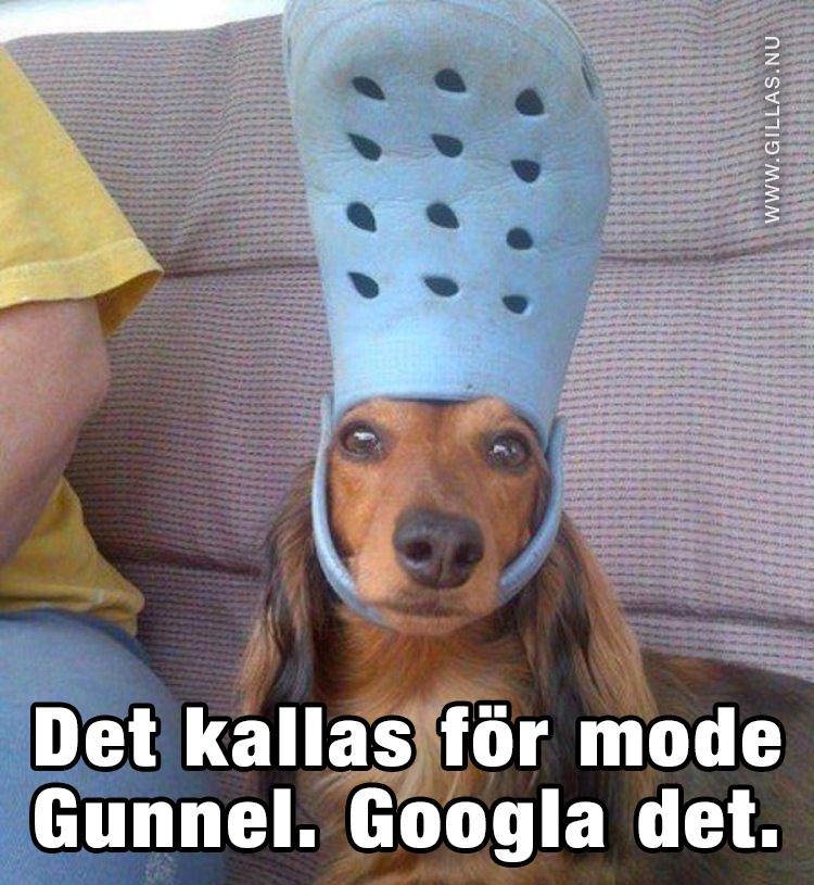 Hund med foppatoffla på huvudet - Det kallas för mode Gunnel. Googla det.