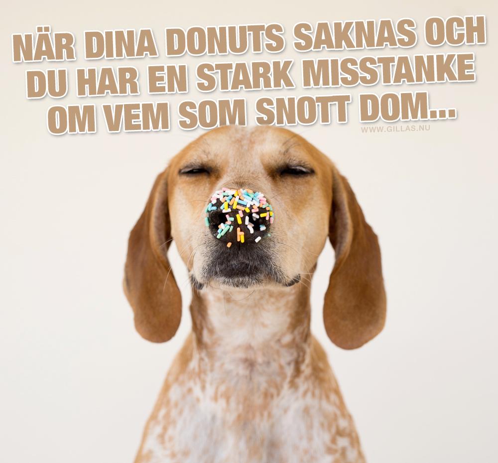 Hund med strössel på nosen - När dina donuts saknas och du inte har en aning om vem som snott dom