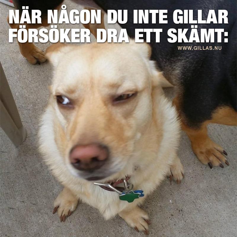 Hund med skeptisk blick - När någon du inte gillar försöker dra ett skämt
