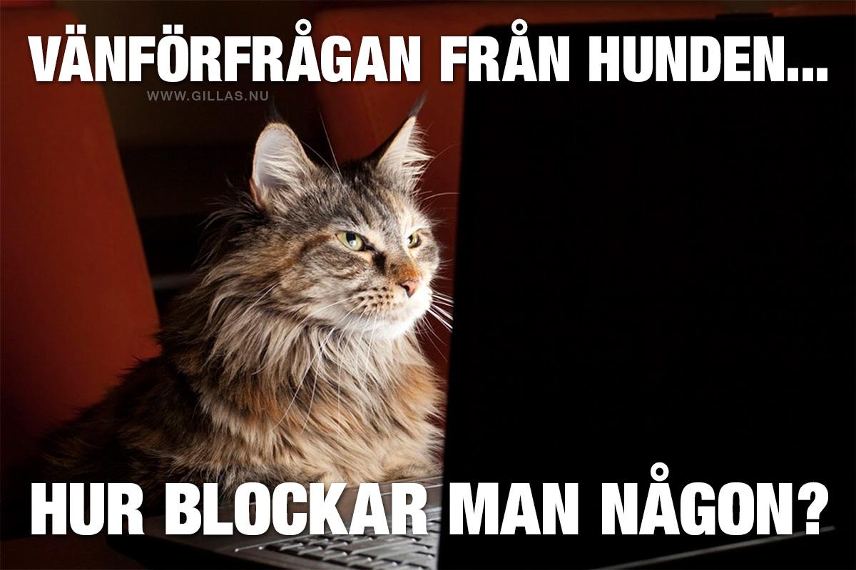 Katt med dator - Vänförfrågan från hunden... Hur blockar man någon?