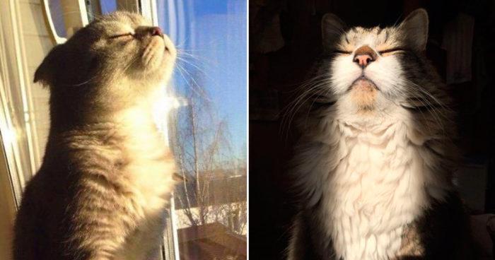 Tjogofem bilder på katter som älskar solen MINST lika mycket som du gör