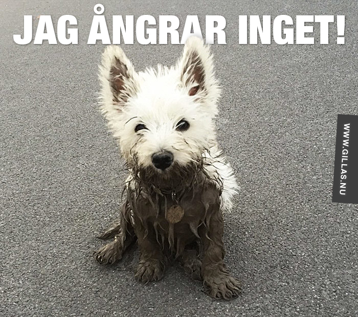 Hund till hälften täckt av lera - Jag ångrar inget!