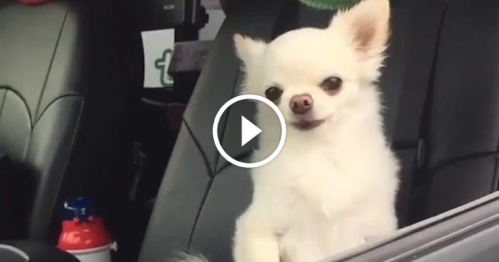VIDEO: Det finns morgonpigga människor och så finns det jag