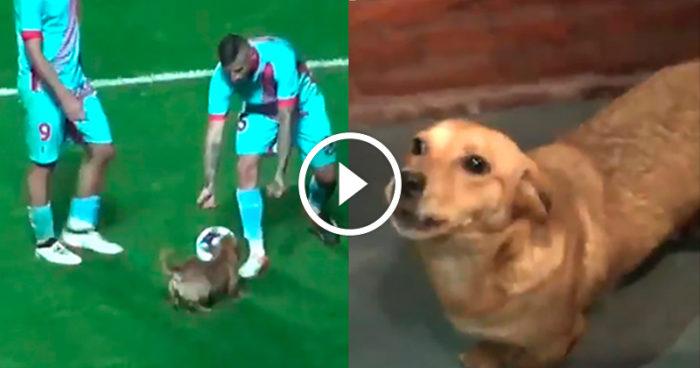 VIDEO: Hunden stormar fotbollsplanen och vinner både publiken och spelarnas hjärtan!