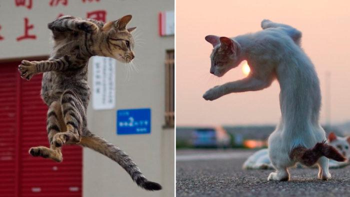 Tjugofem underbara bilder på katter som tränar för att bli ninjor!