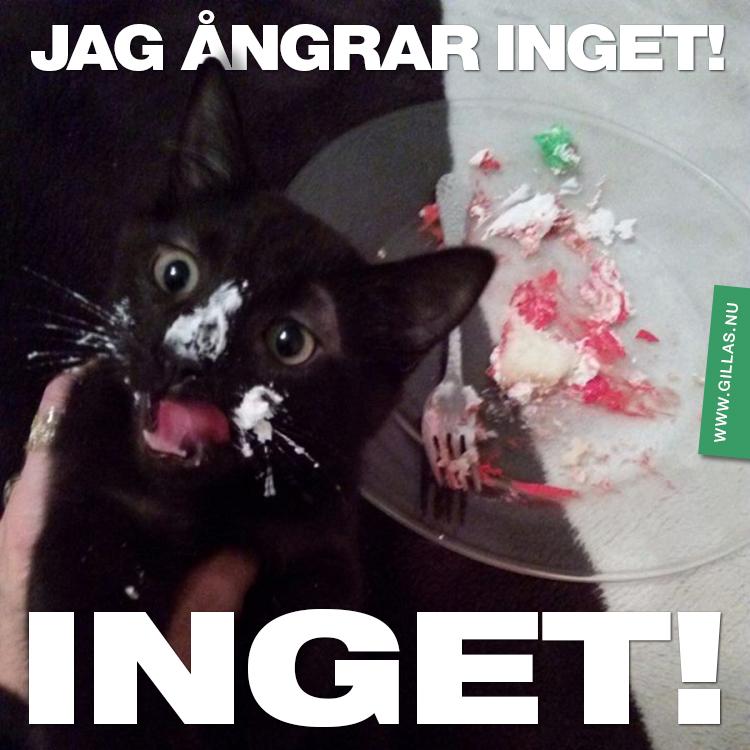 Katt framför uppäten tårta - Jag ångrar inget!