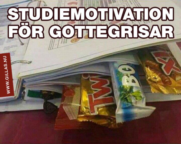 Hur man motiverar sig att plugga