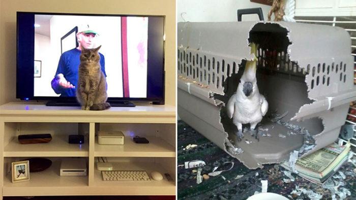 Sexton bilder som bevisar att våra sällskapsdjur kan vara riktiga skitstövlar