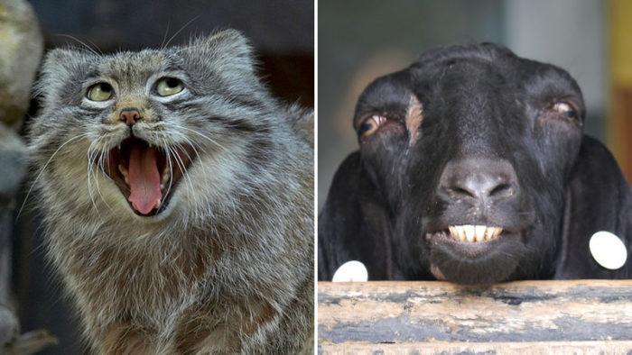28 underbart roliga bilder på djur som som kommer ge dig dåligt samvete för att du skrattar!