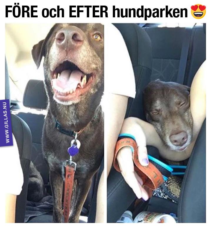 Pigg hund och trött hund - FÖRE och EFTER hundparken
