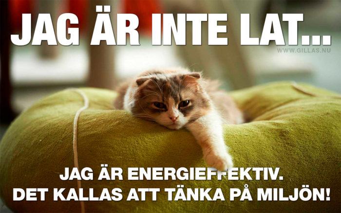 Katter är mer miljömedvetna än du tror!