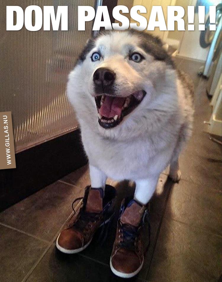 Glad hund i skor - Dom passar!