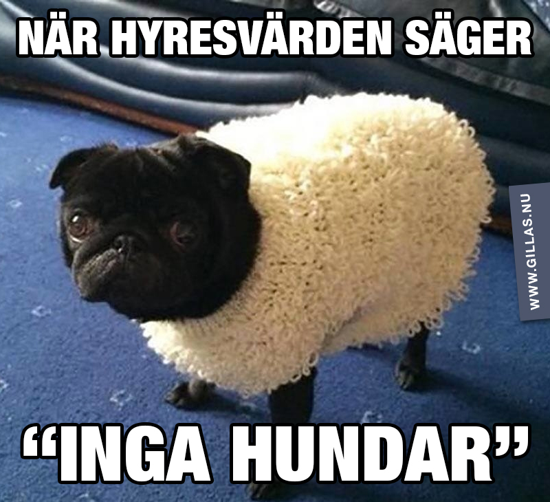 """Hund i fårkläder - När hyresvärden säger """"inga hundar"""""""