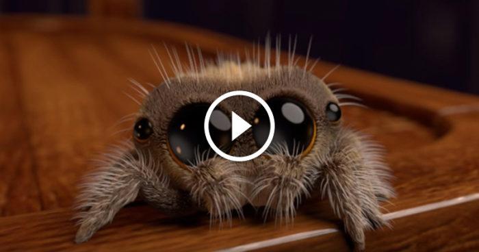 Det här är Lucas, och han kommer antagligen bota din spindelfobi för gott!