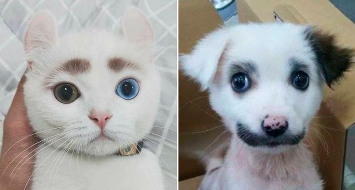 17 bilder på gulliga sällskapsdjur med unika och vackra pälsmönster!