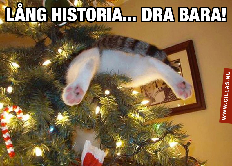 Katt i julgran med bakbenen som sticker ut