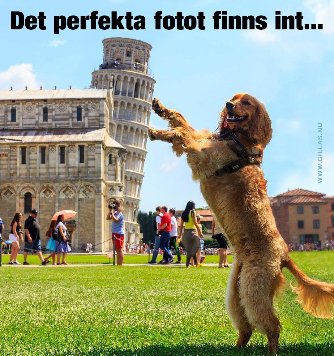 Hund som håller upp lutande tornet i Pisa