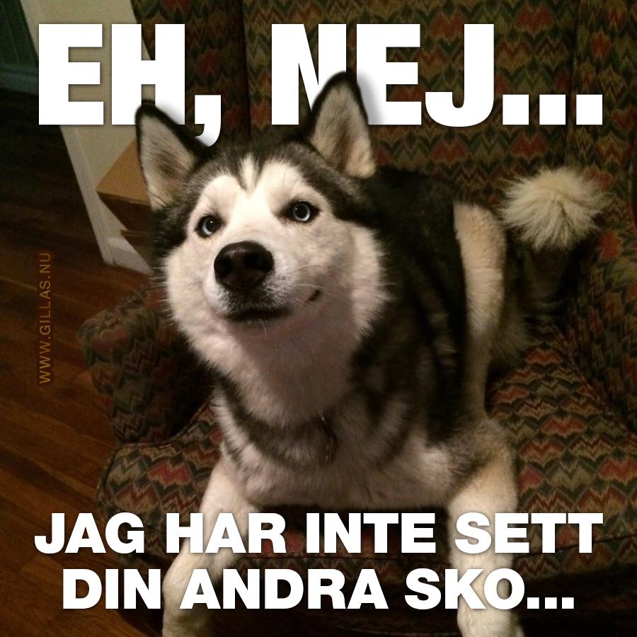 Hund som ser oskyldig ut