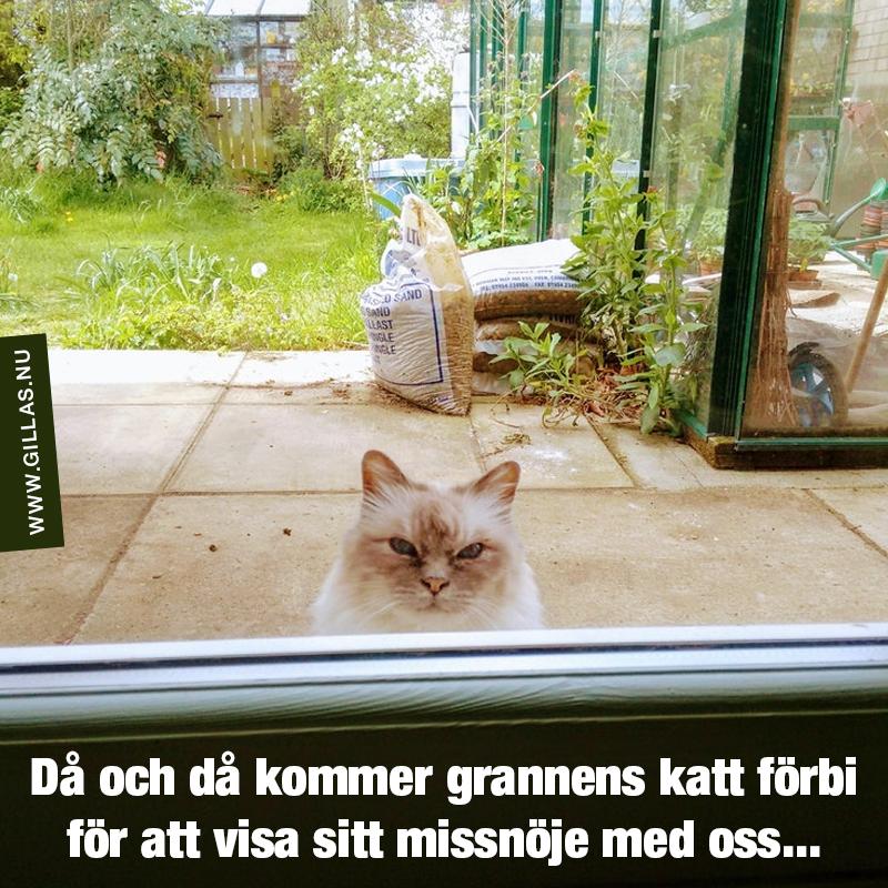 Missnöjd katt utanför dörr