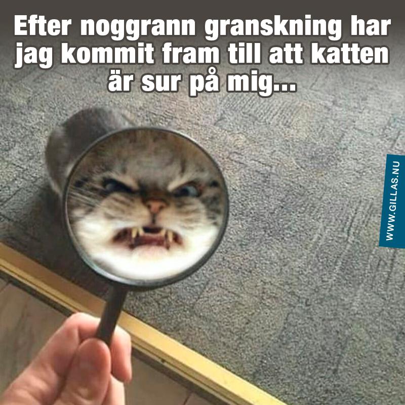 Sur katt genom förstoringsglas