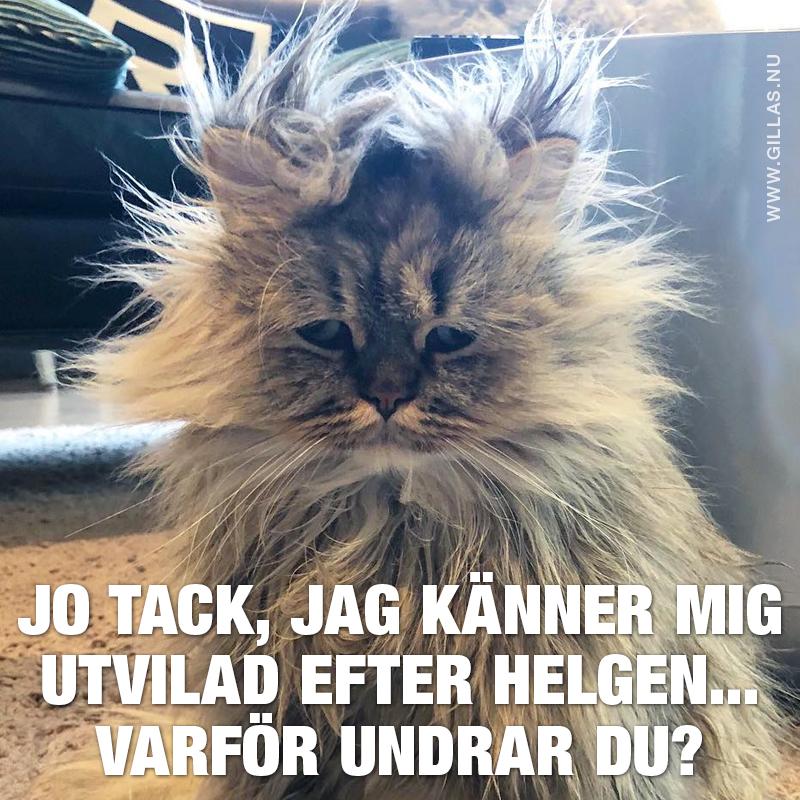 Katt med rufsig päls
