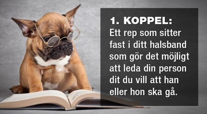 Tretton ord från hundens ordbok som förklarar en hel del av deras beteende