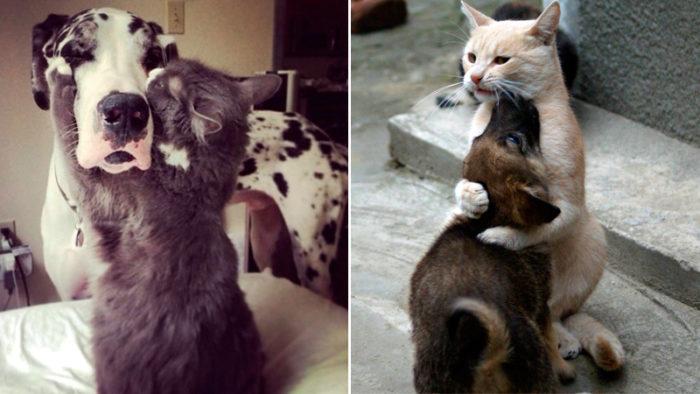 20 underbara bilder på katter som verkligen älskar sina fina hundkompisar!