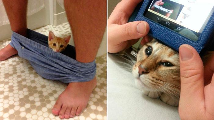 24 bilder på söta katter som helt saknar känsla för det här med personligt utrymme!
