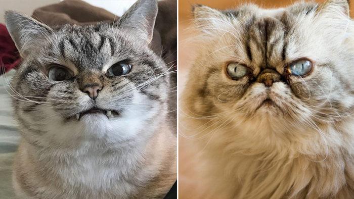 Tjugosex bilder på söta katter som med allra största tydlighet visar vad dom egentligen tycker om dig