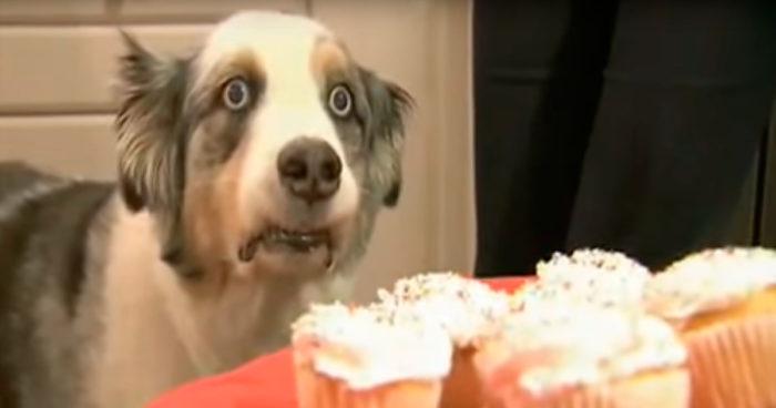 Minns du Cupcake-hunden? Det här klippet är alldeles för roligt för att falla i glömska!