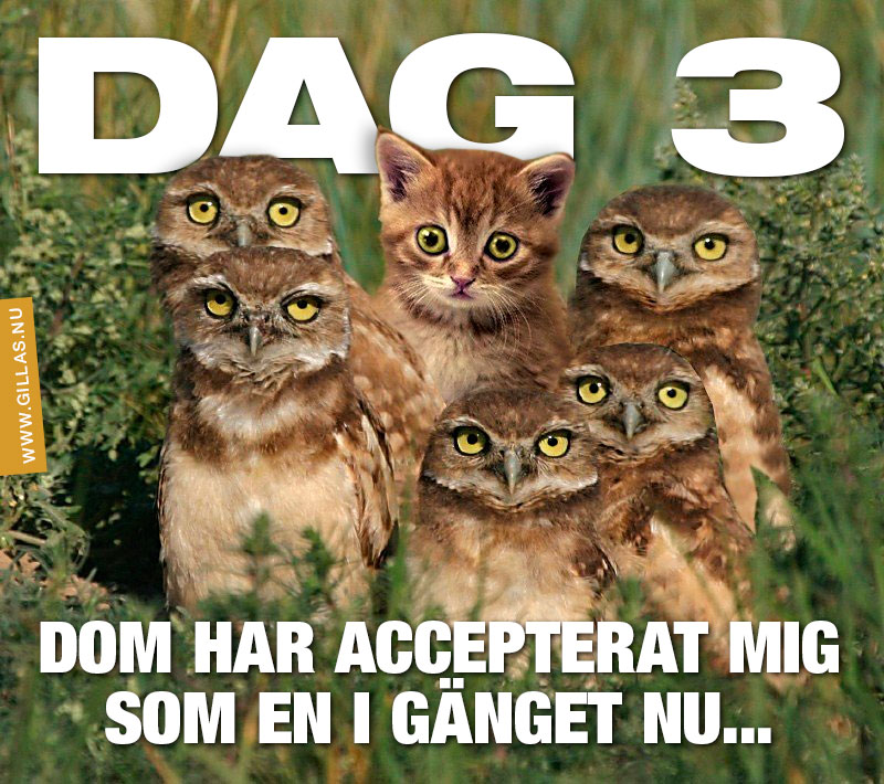 En katt och fem ugglor