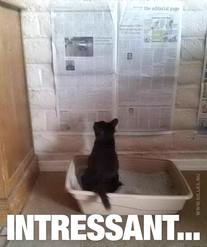 Vem sa att katter inte bryr sig om något annat än sig själva?