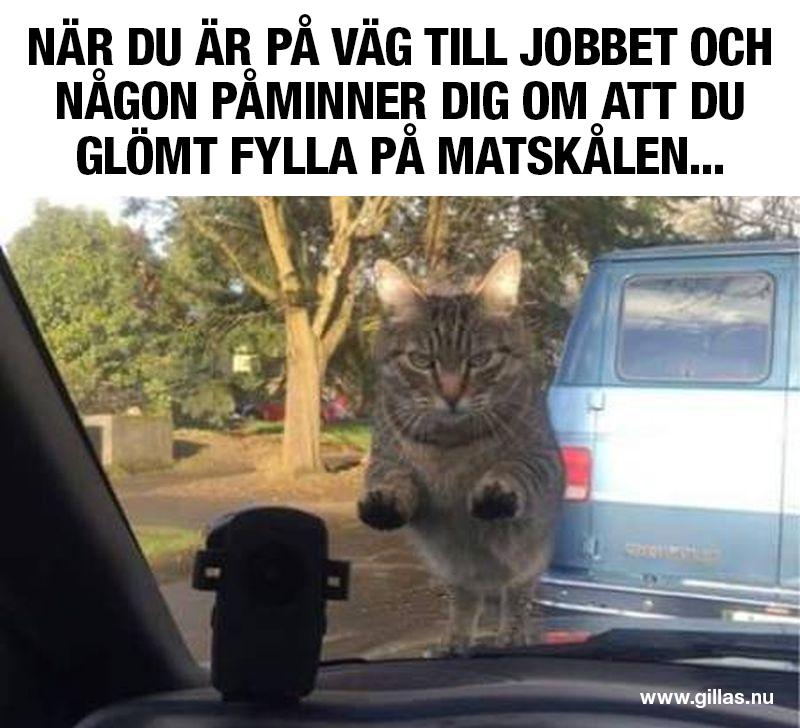 Arg katt tittar in genom framrutan på en bil