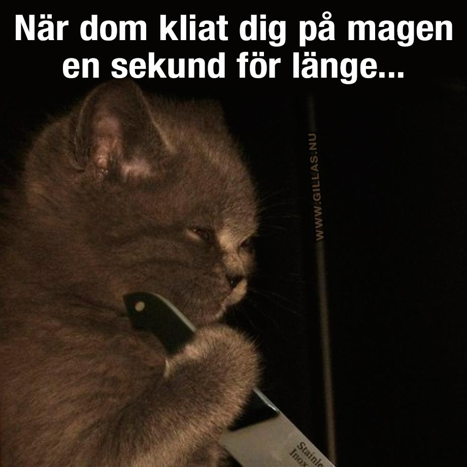 Katt med kniv