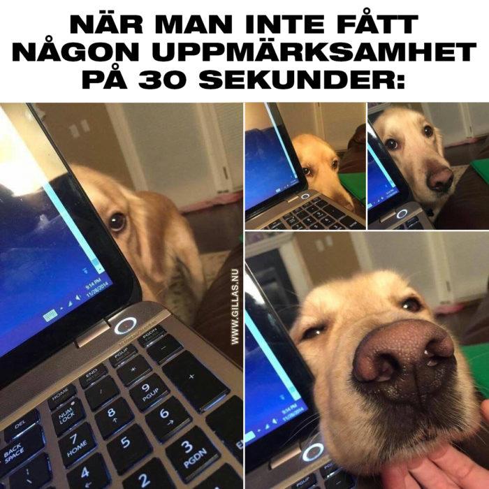 Alla hundägare känner till problematiken (och glädjen)